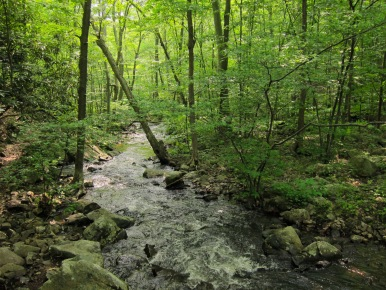 Posts_Brook_from_Norvin_Green_State_Forest_Lower_Trail