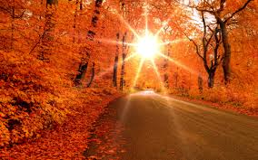 Autumn road 1