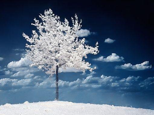 albero-natale