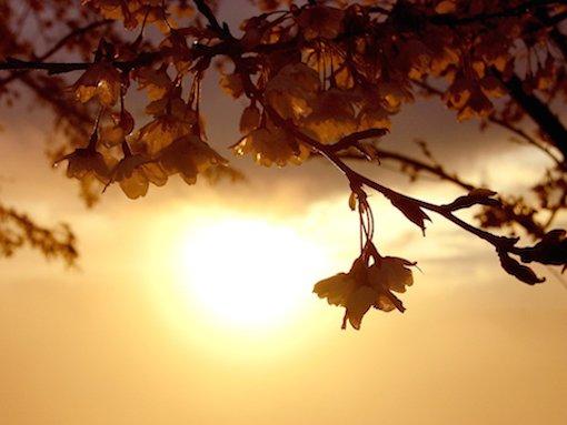 foto_primavera_7022