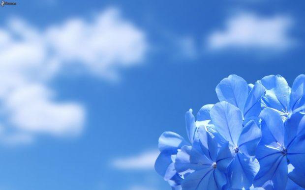 cielo-fioreblu.jpg