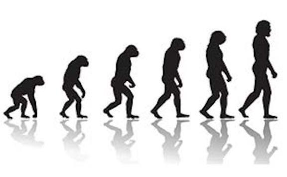 l-evoluzione-della-struttura-scheletrica